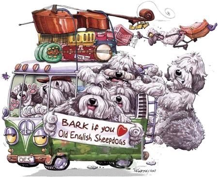 Староанглийская овчарка (БОБТЕЙЛ) - ФОРУМ